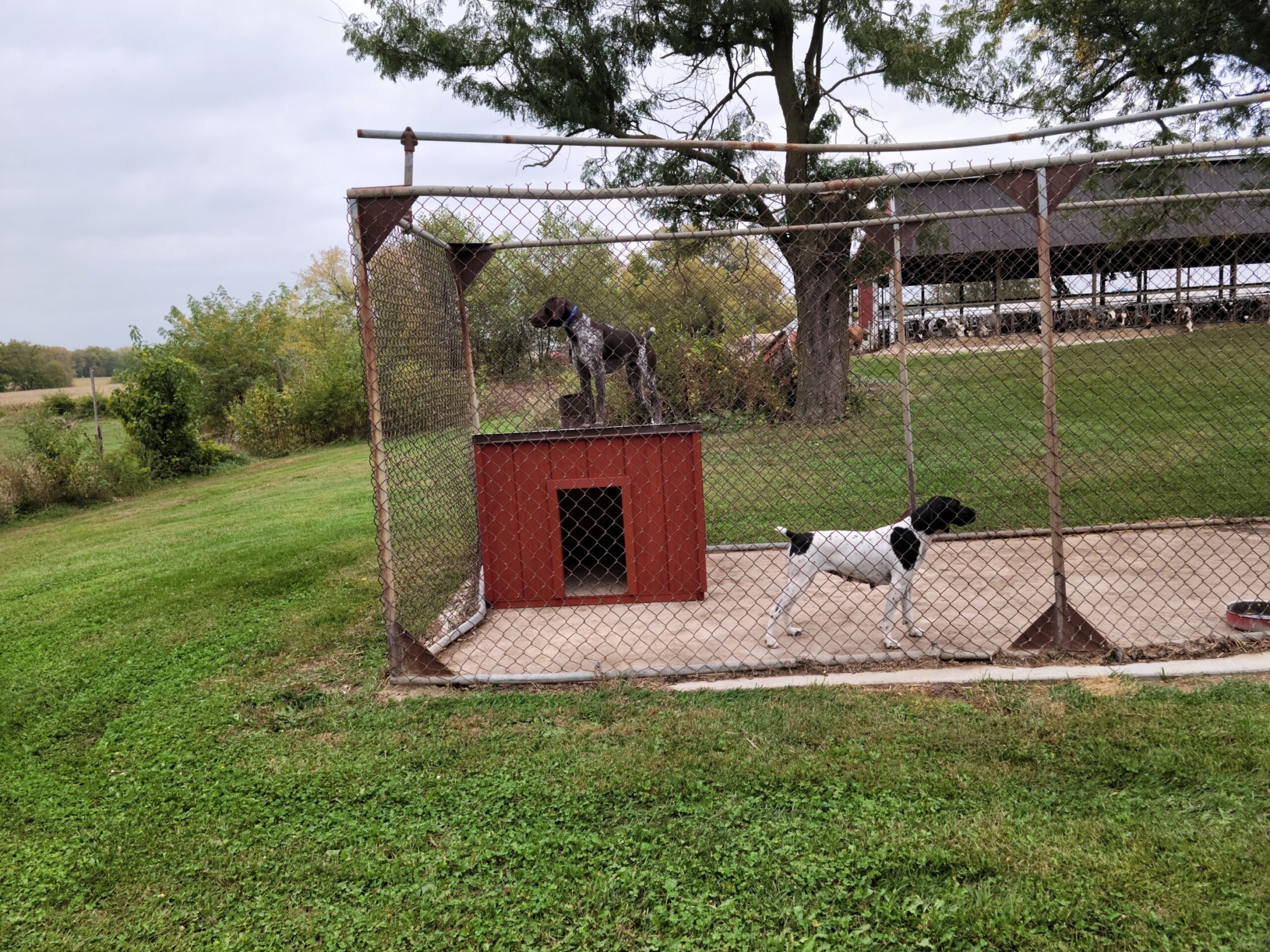 Custom Built Dog House